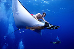 For a few brief seconds a freediver rides on the back of a huge Manta Ray (Manta birostris) off San Benedicto Island in the Revillagigedos Islands, Mexico. The manta rays here seem to actually enjoy interacting with divers