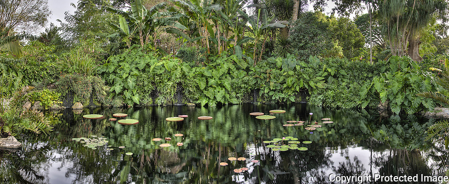 Fairchild Tropical Botanic Gardens, Anthurium Clavigerum, Miami, Coral Gables, Lily Pads, Palm Trees, Pond, Foliage, Panorama<br />