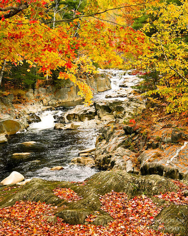 Rapids on the Swift River in Rumford Maine with Fall colors on the trees and leaves on the ground with rocks all around.