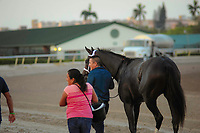 HALLANDALE BEACH, FL - APRIL 01: Always Dreaming head back to the barn with a very happy groom in tow. The Bodemeister colt won big in the 66th running of the $1 million Xpressbet Florida Derby at Gulfstream Park on April 01, 2017 in Hallandale Beach, Florida. (Photo by Carson Dennis/Eclipse Sportswire/Getty Images)
