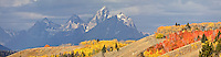 A panoply of fall colors on the hills east of the Grand Tetons by Grand Teton National Park in the Bridger Teton National Forest outside of Jackson Wyoming.