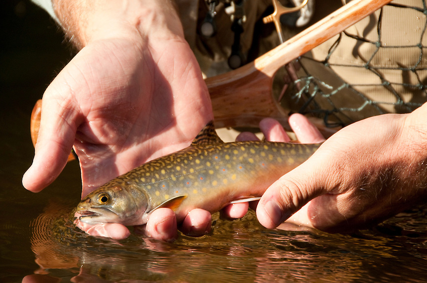 A brook trout from the Fox River in Michigans Upper Peninsula.