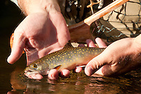 FISHING STOCK PHOTOGRAPHY PHOTOS PICTURES IMAGES