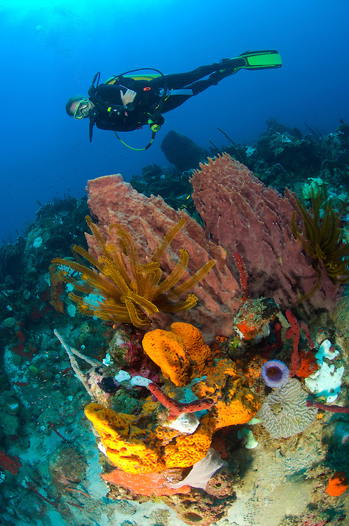 A female diver looks on at a colourful reef in north Dominica