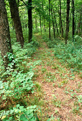 Foot path in Missouri woods, Oaks, Hickories, Maples, etc. July