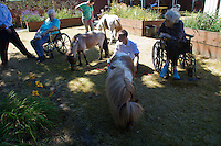 Miniature horses visit with residents at the Park Ridge Skilled Nursing Center in Shoreline, Washington on July 10, 2014. Veterinarian Dana Bridges Westerman of professional Equine Therapeutic out of Monroe, WA arranges the therapy visit every year.