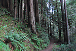 Trail in redwood forest at Forest of Nisene Marks State Park