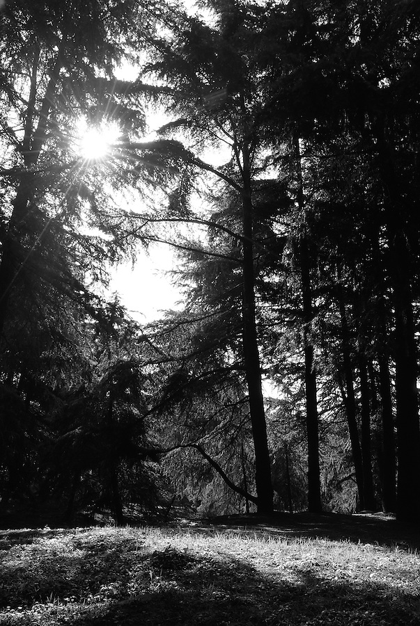 Magnificent nature deep wood photograph of morning scene in black and white style. China landscape fine art photography by Paul Chong.