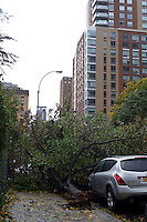 A tree uprooted onto a car in the New York neighborhood of Chelsea from the high winds of Hurricane Sandy is seen on Tuesday, October 30, 2012. Hurricane Sandy roared into New York disrupting the transit system and causing widespread power outages. Con Edison is estimating it will take four days to get electricity back to Lower Manhattan. (© Frances M. Roberts)