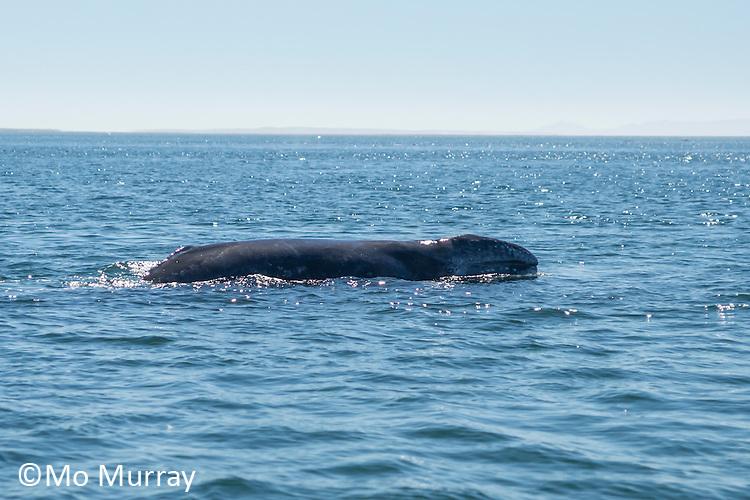 Guerrero Negro Whale Encounters