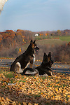 German Shepherds outdoors in brilliant Fall Color Shopping cart has 3 Tabs:<br />