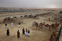 Judges walk through pens viewing camels in competition.  The vast space surrounding the established pageant grounds reveals dunes and little else for miles.