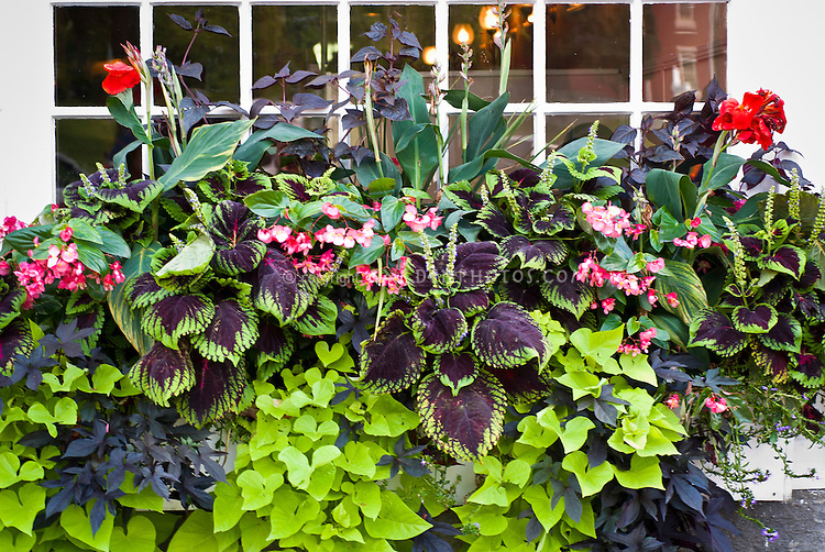 gardening annual plant and garden  annual plant gardening tips & information  annual plant cycle is in  reference to a once a year cycle of life annual garden plants germinate from  seed, then blossom and finally set seeds before dying back although they.