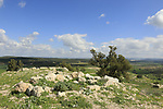 Israel, Shephelah, ruins of the Crusader fortress Blanche Garde in Tel Zafit, identified as Biblical Gath