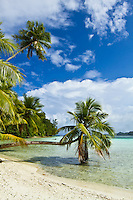 Ideal tropical beach with palm trees, Palau Micronesia. (Photo by Matt Considine - Images of Asia Collection)