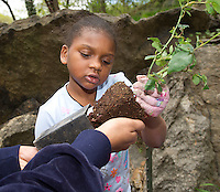 Girl Scouts and Brownies plant heritage roses in Mt. Morris Park in the Harlem Heritage Rose District in New York in celebration of Earth Week on Saturday, April 30, 2011.  The Heritage Rose District of New York, located in Harlem is the largest public planting of heritage roses in the east coast.  (© Frances M. Roberts)