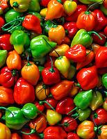 Habanero peppers