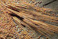Wheat grains and stalks..For larger JPEGs and TIFF versions contact EFFECTIVE WORKING IMAGE via our contact page at : www.photography4business.com
