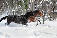 Winter Snow Horses Two