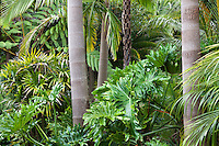 Worth California garden - tropical foliage tapestry of palms, tree ferns and philodendron