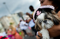A dog, dressed in a pirate costume, takes part in the Blocao pet carnival show at Copacabana beach in Rio de Janeiro, Brazil, 12 February 2012.
