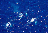 Humpback Whale from the air. Stellwagen Bank National Marine Sanctuary.