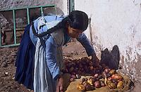 Amérique/Amérique du Sud/Pérou/Env d'Urubamba : L'Acienda a Yaraulca - Tri des pommes de terre