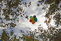 cluster of balloons in the sky surrounded by trees
