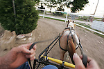 CHAD PILSTER &bull;&nbsp;Hays Daily News<br /> <br /> Joe Schueler, a volunteer, drives a cart lead by a miniature horse on Monday, June 3, 2013, at the Blue Sky Miniature Horse Farm in Hays, Kansas. The farm has some of the smallest horses in Kansas.