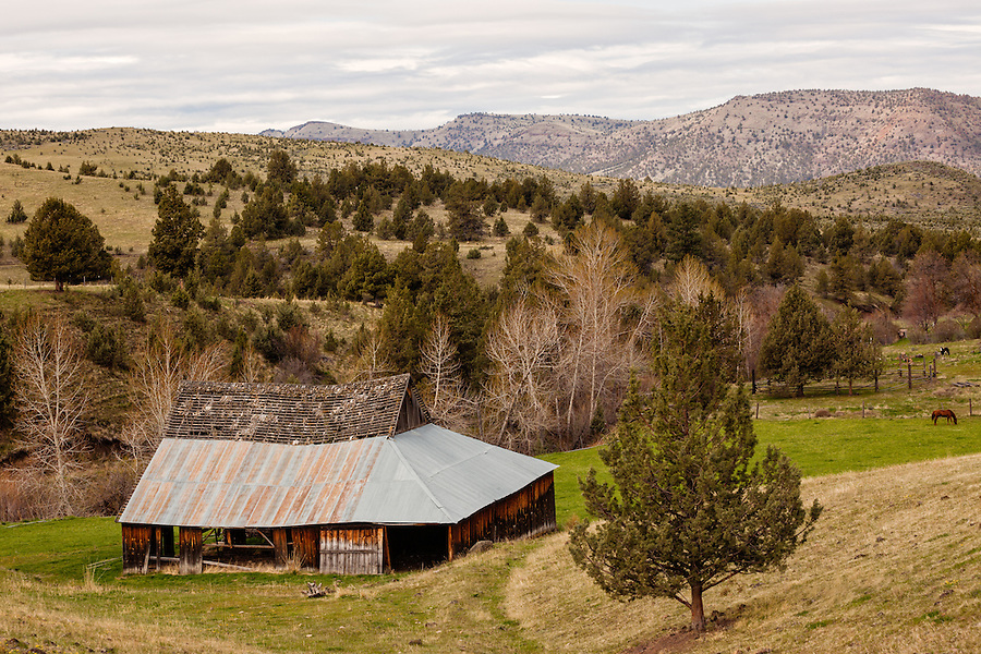 A decaying old barn is seen near some grazing horses in Wheeler County, Oregon.