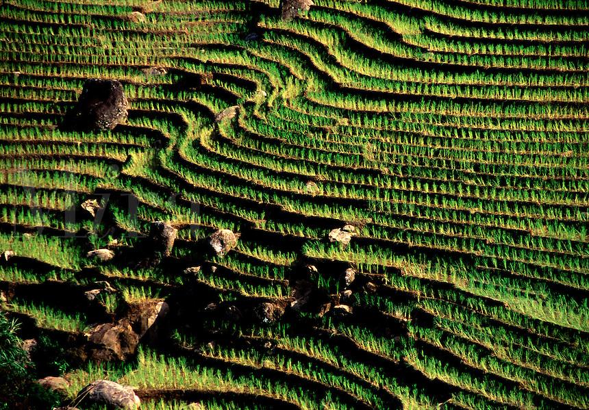 Hillside rice terraces Tanatoraja Toraja Land near Rantepao Sulawesi Indonesia.
