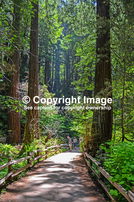 Muir woods california usa victor patterson for Patterson woods