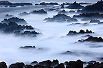 A misty morning on the Monterey Coast, California.