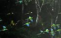 ECUDAOR. Kapawi Eco Lodge