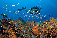 Sam diving at Seamount, St. Croix, USVI