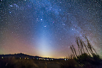 The Zodiacal Light in the springtime evening sky from the northern hemisphere, from New Mexico, March 2013. This is a stack of 5 x 5 minute tracked exposures with the Samyang 14mm lens at f/2.8 and Canon 5D MkII at ISO 800. An Iridium satellite flare is at upper right.