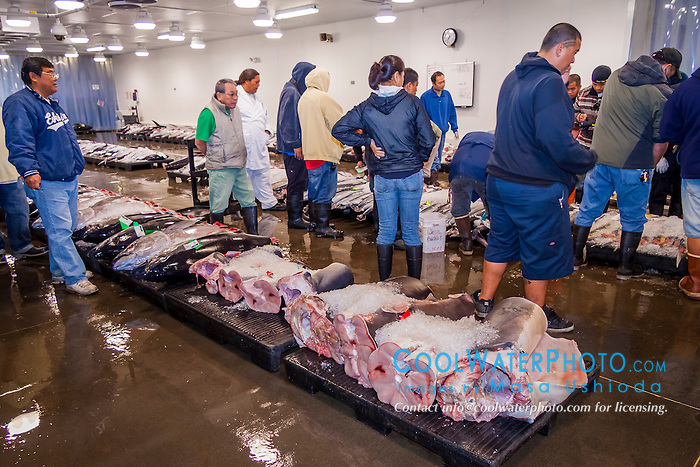 Mako and thresher shark meat at honolulu fish auction for United fishing agency