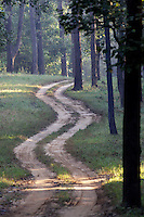 Dirt Road in Kanha National Park, India