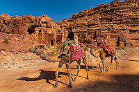 Camels, Petra Archaeological Park, Petra, Jordan.