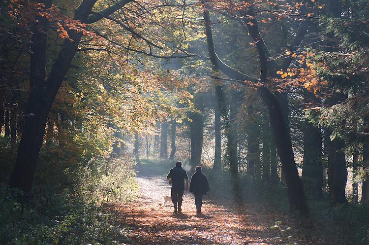 Couple walking dog on a misty autumnal woodland path