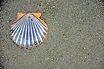 Cape Cod Beach & Shell