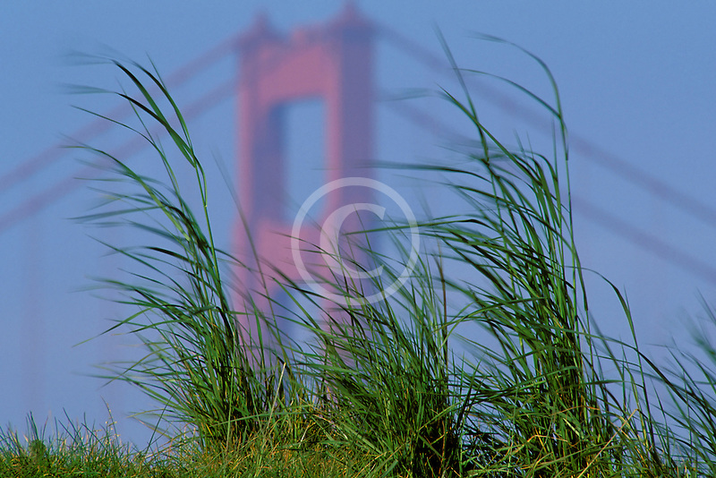 California, San Francisco, Crissy Field, GGNRA, Golden Gate and grasses