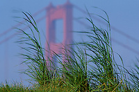 California, San Francisco, Crissy Field, GGNRA, Golden Gate and grasses