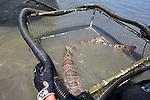 Leopard Shark In Pen