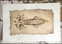 BNPS.co.uk (01202 558833)<br /> Pic: PhilYeomans/BNPS<br /> <br /> Rikey's latest work is actually the 200 million year old squid/cuttlefish that actually produced the ink.<br /> <br /> Squids in - Dorset artist can't keep up with demand - as her fossil art is done using incredibly scarce 200 million year-old fossilised ink.<br /> <br /> Rikey Austin, 49, extracts ink from a phragmoteuthid fossil, which are somewhere between a squid and a cuttlefish and lived approximately 200 million years ago. <br /> <br /> Her husband, geologist Paddy Howe, finds the fossils while walking along the Jurassic Coast in Lyme Regis, West Dorset, which is a hotbed of fossilised activity.<br /> <br /> Mrs Austin then powders the ink, adds a tiny bit of water and uses it to create captivating images of dinosaurs and other fossilised creatures. <br /> <br /> The phragmoteuthid defended itself by shooting out ink and some of the fossils still have their original pigment in an ink sack inside.<br /> <br /> However, these fossils do not preserve themselves as well as other fossils, so it is extremely rare to find one with its ink sack intact.<br /> <br /> As a result, the mother-of-three has only produced seven drawings since she first experimented with fossilised ink in 2010.