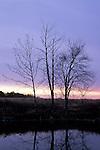 Winter trees and pond at dawn, North Carolina