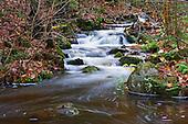 Undisturbed creek in forest