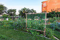 Urban community vegetable garden.