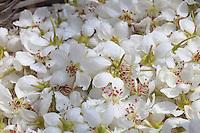 Détail de fleurs.///Detail of flowers.