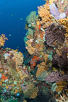 Coral and sponge scenic<br /> Sisters Cave<br /> Isle De Rhonde<br /> Grenadines